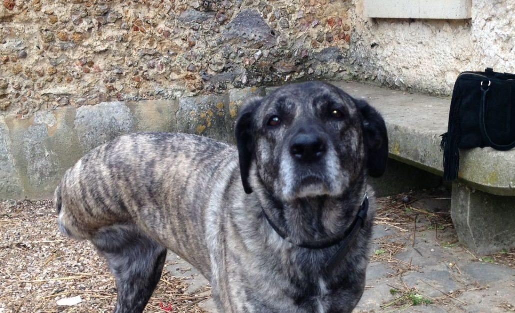 Cherche famille d'adoption pour chien handicapé en Seine