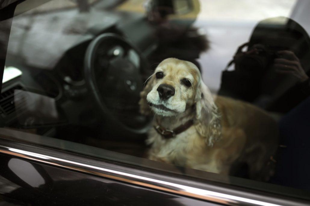 loi que faire si on trouve un chien dans une voiture en. Black Bedroom Furniture Sets. Home Design Ideas