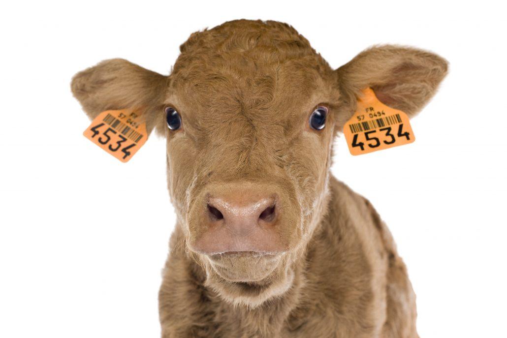 Proposition de loi pour éviter la souffrance animale lors