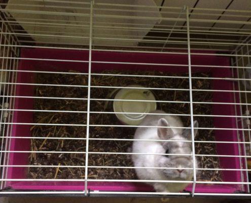 Lapin en cage