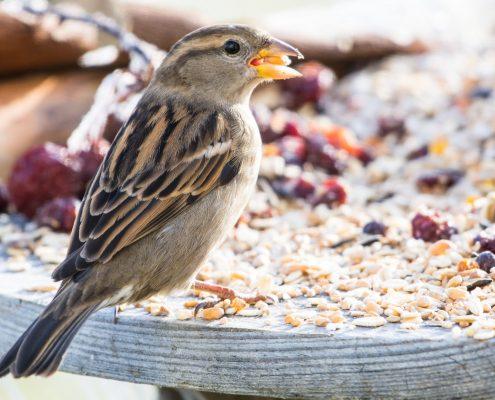 Oiseaux en hiver photos