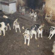 Sauvetage chiens maltraités