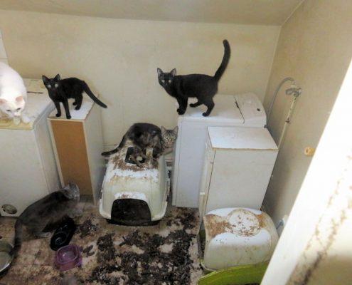 Sauvetage chats en détresse