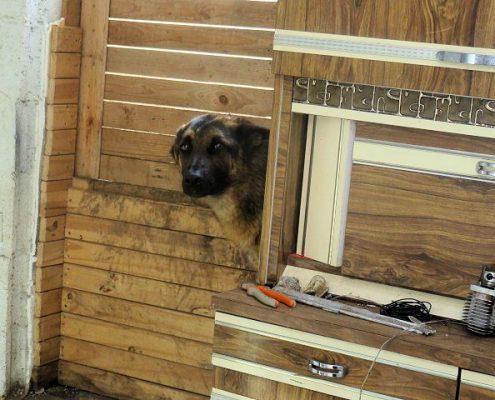 Sauvetage chien maltraité 2017