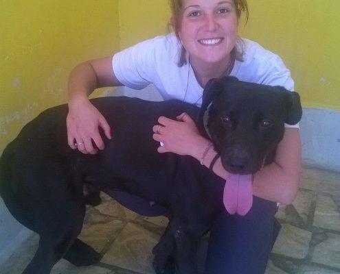 Labrador noir adulte