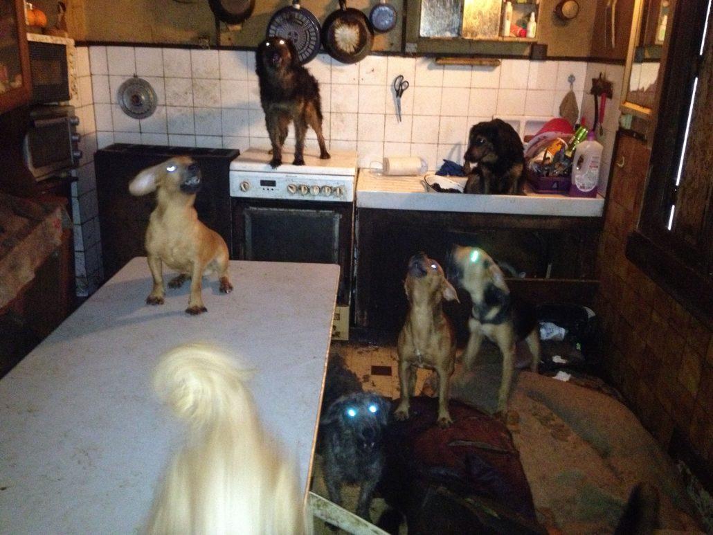 une trentaine de chiens d tenus chez un particulier saisis chelles. Black Bedroom Furniture Sets. Home Design Ideas