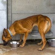 sauvetage adoption chien