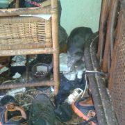 Chats maltraités