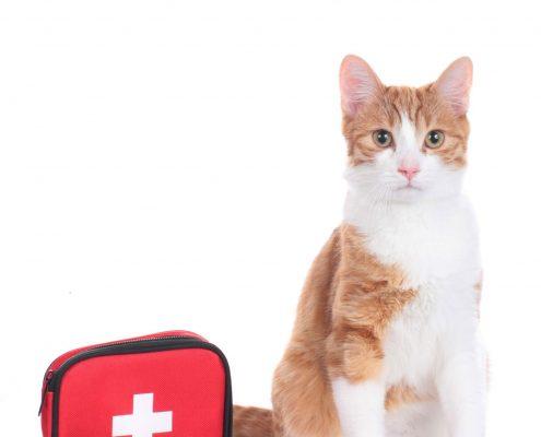 Premiers secours animaux