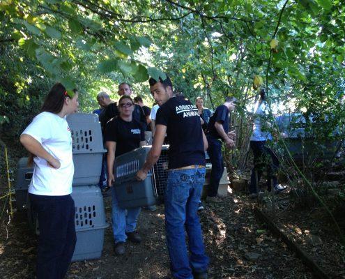Fondation assistance aux animaux
