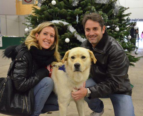 Adoption chien noël