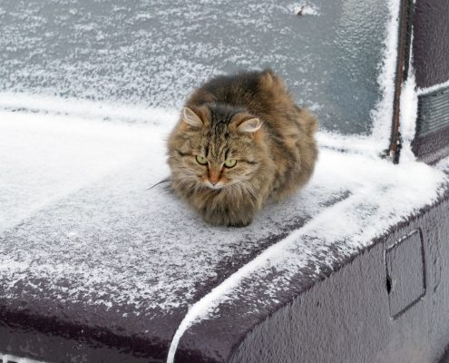 Chat extérieur hiver