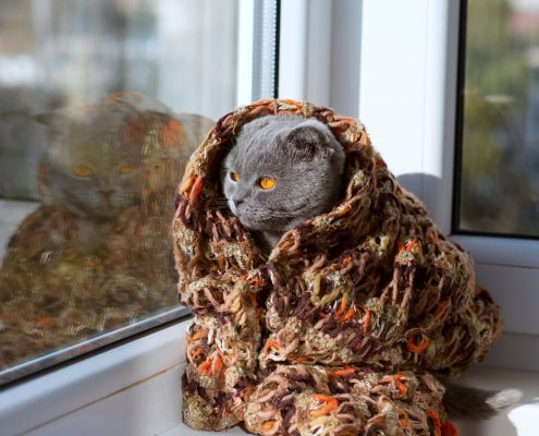 Chat d'hiver