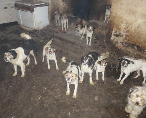 Une Vingtaine De Chiens Sauves Bientot A L Adoption Dans Nos Refuges Franciliens Fondation Assistance Aux Animaux Actualites