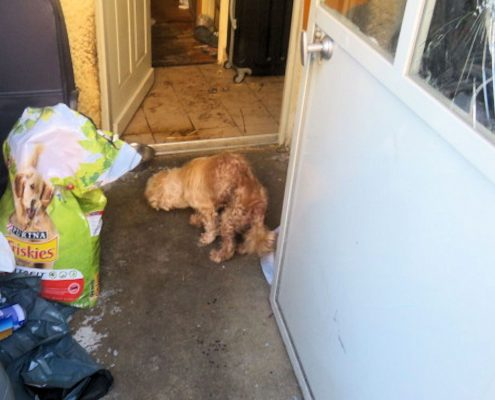 Sauvetage chiens abandonnés