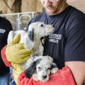 adoption sauvetage chiens
