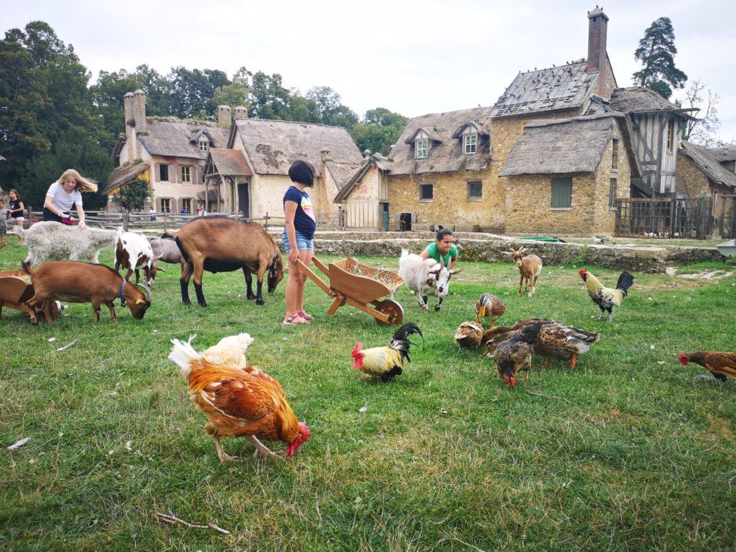La ferme du Hameau de la Reine à Versailles est un véritable lieu de  rencontre avec la vie. - Fondation Assistance aux Animaux - Actualités