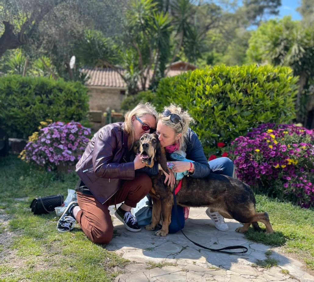 BALOU - x basset hound 11 ans - Refuge de Carros (06 Unnamed-copie-10-1030x923