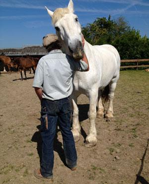 centre accueil chevaux