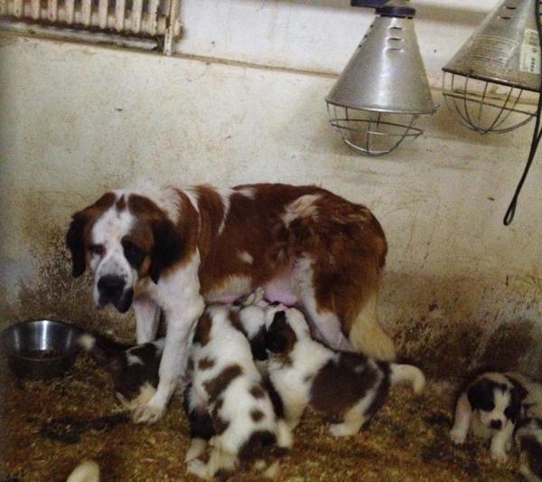 Surpopulation canine par la Fondation Assistance aux Animaux