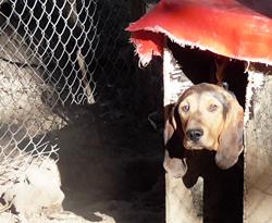 sauvetage chiens