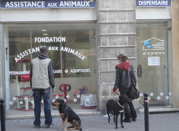 dispensaire animaux bordeaux