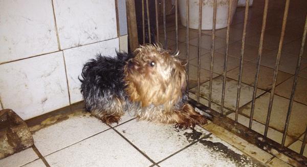 Sauvetage de chiens dans un élevage clandestin par la