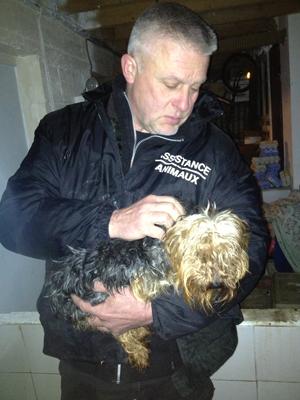 sauvetage animaux