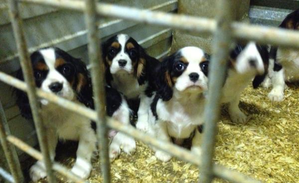 Sauvetage dans un élevage de chiens par la Fondation