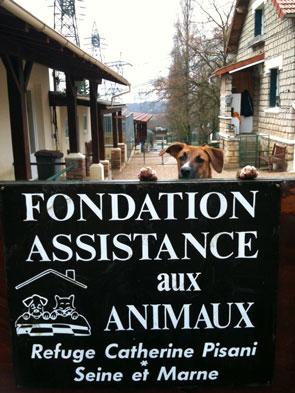 refuge fondation asistance aux animaux