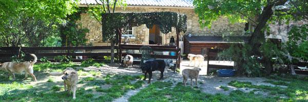 les maisons de retraite de la fondation assistance aux animaux