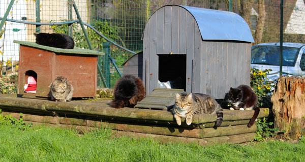 maison de retraite animaux
