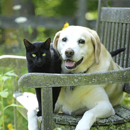 Site de rencontre personnes aimant les animaux